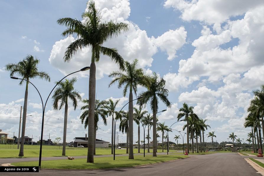 Palmeiras Entrada