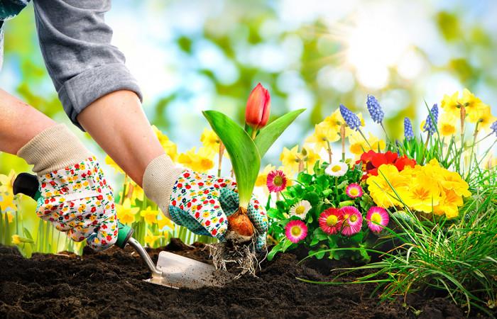 10 Dicas de Jardim Para Sua Casa